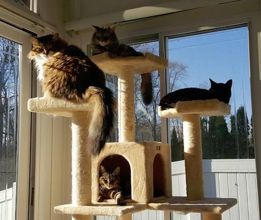 Sherry Umlah's cats